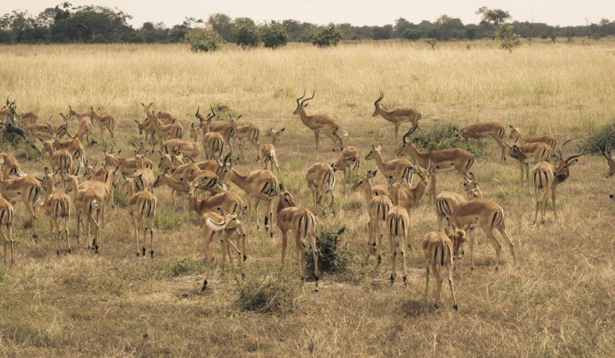 Selous Safari
