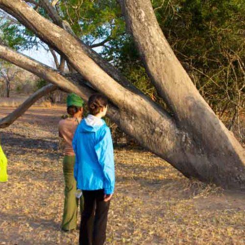 Walking safari in Selous Game Reserve